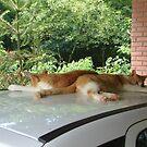 Automotive cats by Marilia Martin