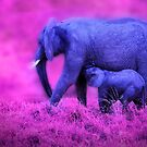 Blue Elephant by Charuhas  Images