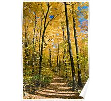 Woodland Trail under Autumn Leaves Poster