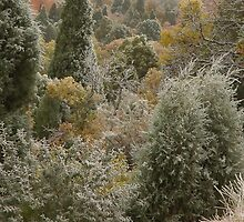 Frosty Morning   Garden of the Gods   Colorado Springs by gtowns
