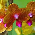 Colorful Orchids by Terri~Lynn Bealle