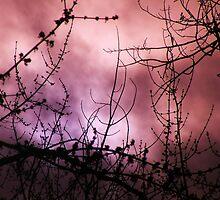 Purple Haze by Thomas Stevens