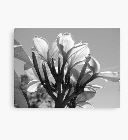 Sunny Blooms-(B&W) Canvas Print