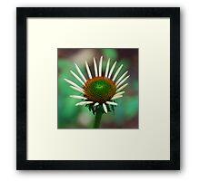 Healing Flower Framed Print