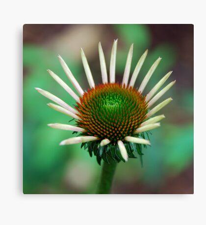 Healing Flower Canvas Print
