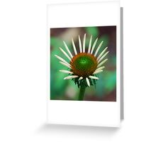 Healing Flower Greeting Card