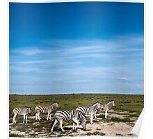 Zebra | Etosha Pan Poster