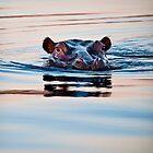 Hippo | Lianshulu by Olwen Evans