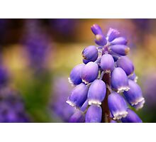 Purple drops Photographic Print
