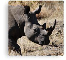 White Rhino | South Africa Canvas Print