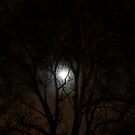 I see the moonlight strike by Ninit K