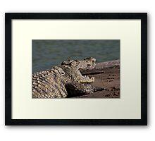 Basking Crocodile   Kunene River Framed Print