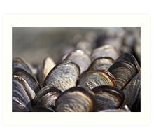 Light Blue Mussels Art Print
