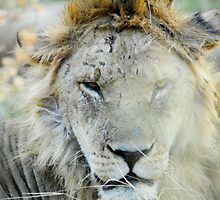 King of the Jungle - Scar face by nasriozel