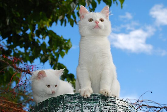 Two Kittens on Top of Roll of Garden Fencing  by jojobob