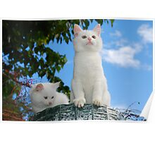Two Kittens on Top of Roll of Garden Fencing  Poster