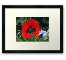 First Poppy of the Season in Mo's Garden 3 Framed Print