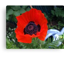 First Poppy of the Season in Mo's Garden 3 Canvas Print
