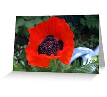 First Poppy of the Season in Mo's Garden 3 Greeting Card