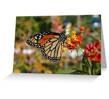 Monarch of Naples Greeting Card