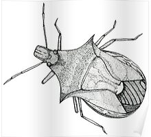 Stink Bug Pen and Ink Poster