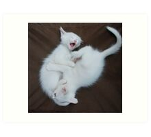 White Kittens Playing  Art Print