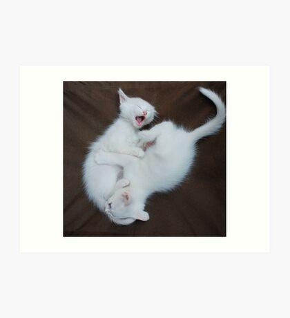 White Kittens Playing  Art Print