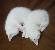 Sleeping White Kittens  by jojobob