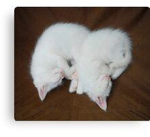 Sleeping White Kittens  Canvas Print