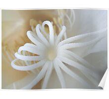 moonflower IV Poster