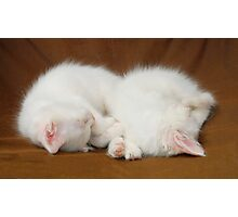 Two Sleeping White Kittens  Photographic Print