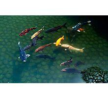 Koi Carp With Tree Reflection Photographic Print