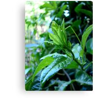 green grows my garden Canvas Print
