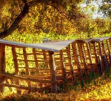 The Old Drying Racks by Terry Marter