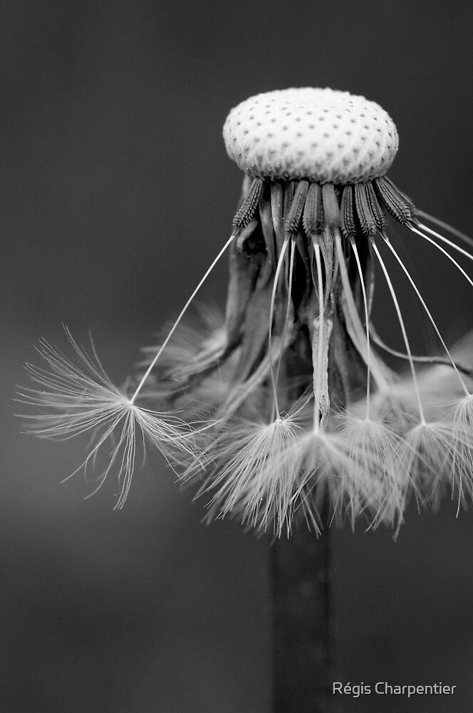B&W flower #11 by Régis Charpentier