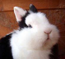 I' m the cutest! by AleFletcher