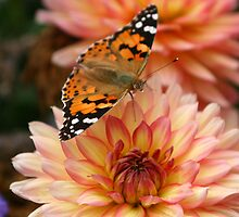 Butterfly by tonni