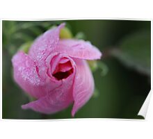 Beautiful Hibiscus 1 Poster