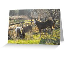 Leah, Daisy Mae and Doc. Greeting Card