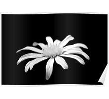 White flower b&w 0638 Poster