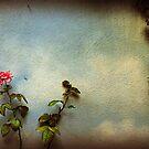 Wilting rose by Silvia Ganora