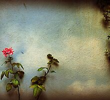 Wilting rose by Silvia Ganora