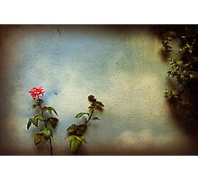 Wilting rose Photographic Print