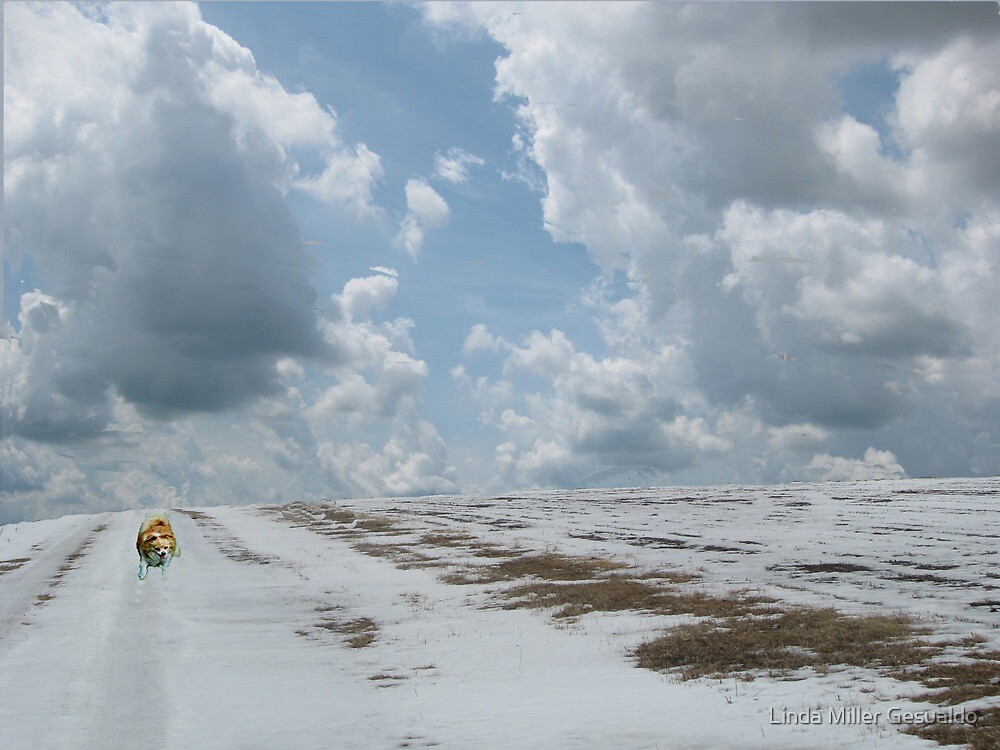 Run Faster Charlie by Linda Miller Gesualdo