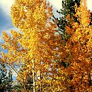 """Fall Colors"" by Lynn Bawden"