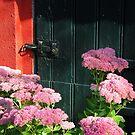 Hemelsleutel ~ Autumn Joy ~ Sedum Spectabile by Hans Bax