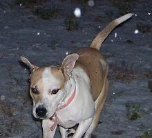 jerzy and snow by gabbielizzie