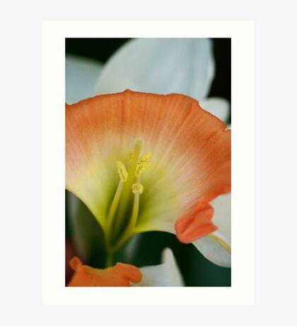 Deformed Narcissus Art Print