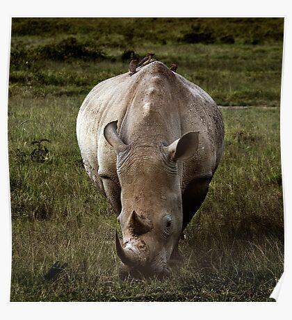 Rhino - Masai Mara Poster