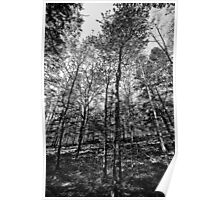 Trees in the Forest Poster